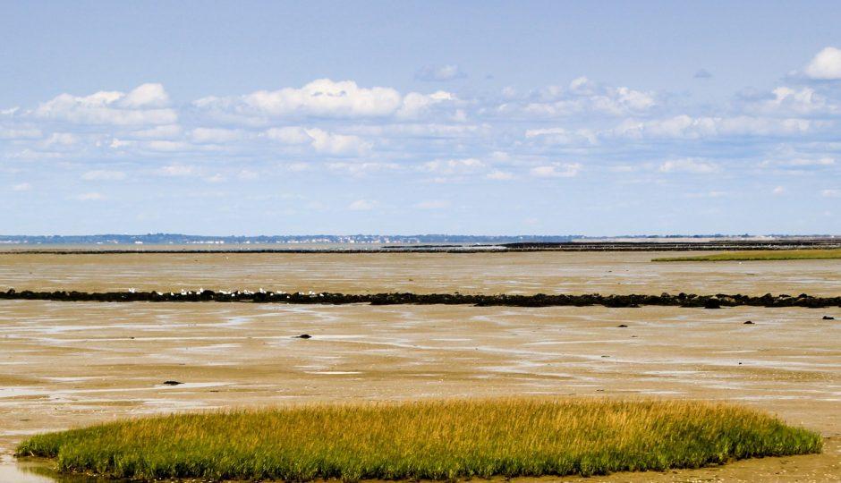 Noirmoutier: les meilleurs endroits pour la pêche aux moules