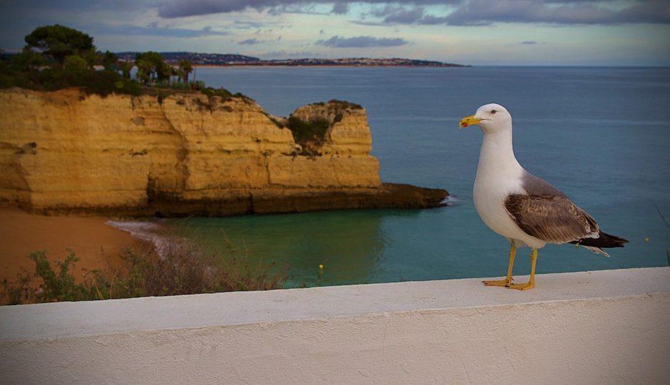 Algarve : l'évasion au soleil